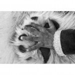 Hand on Paw Photograph - Life at the Edge