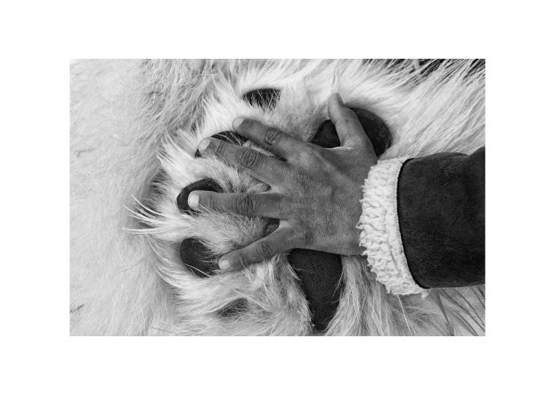 Nordic Collections – Hand on Paw Photo