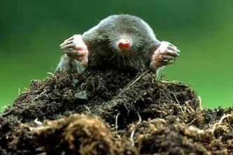 Mr Mole the Archaeologist